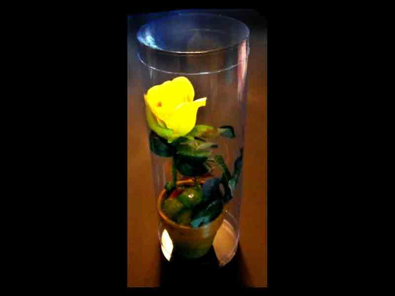 ambalaje-plastic-trandafir-in-ghiveci-413-1