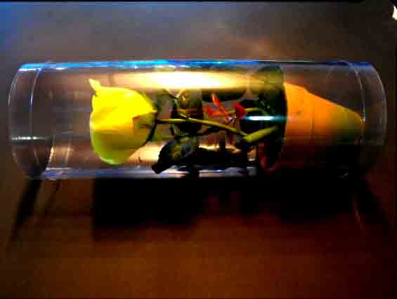 ambalaje-plastic-trandafir-in-ghiveci-413-2